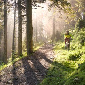 Mountainbikes huren Utrechtse Heuvelrug